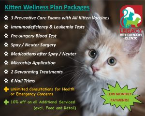 Kitten Wellness Plan